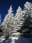 Snow on NM sky